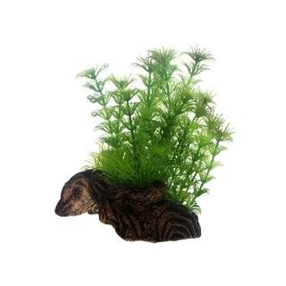 Hobby Flora Root 3