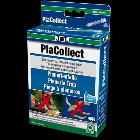 JBL PlaCollect Planarienfalle gegen Plattwürmer